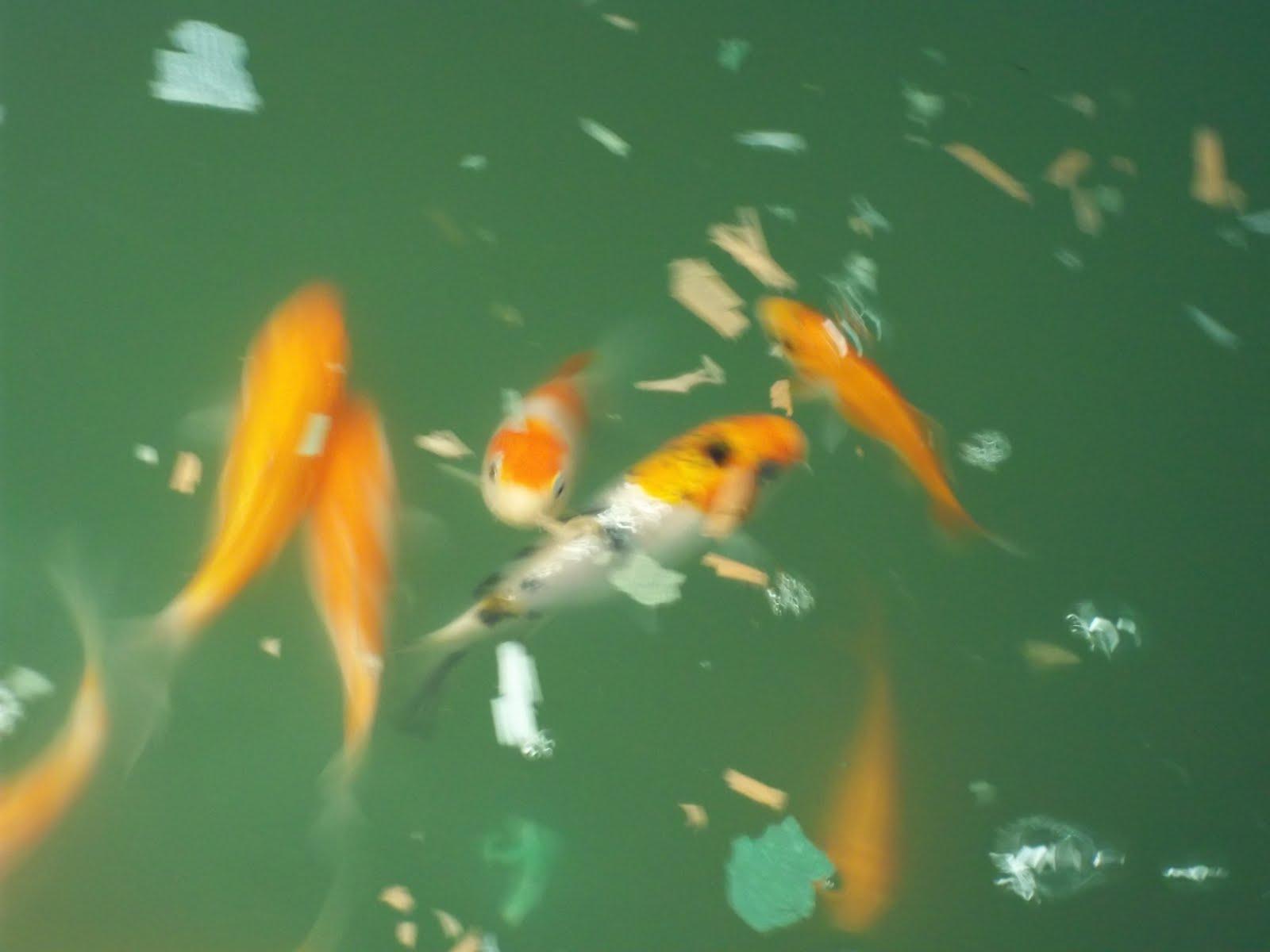 ccres aquaponics CCRES