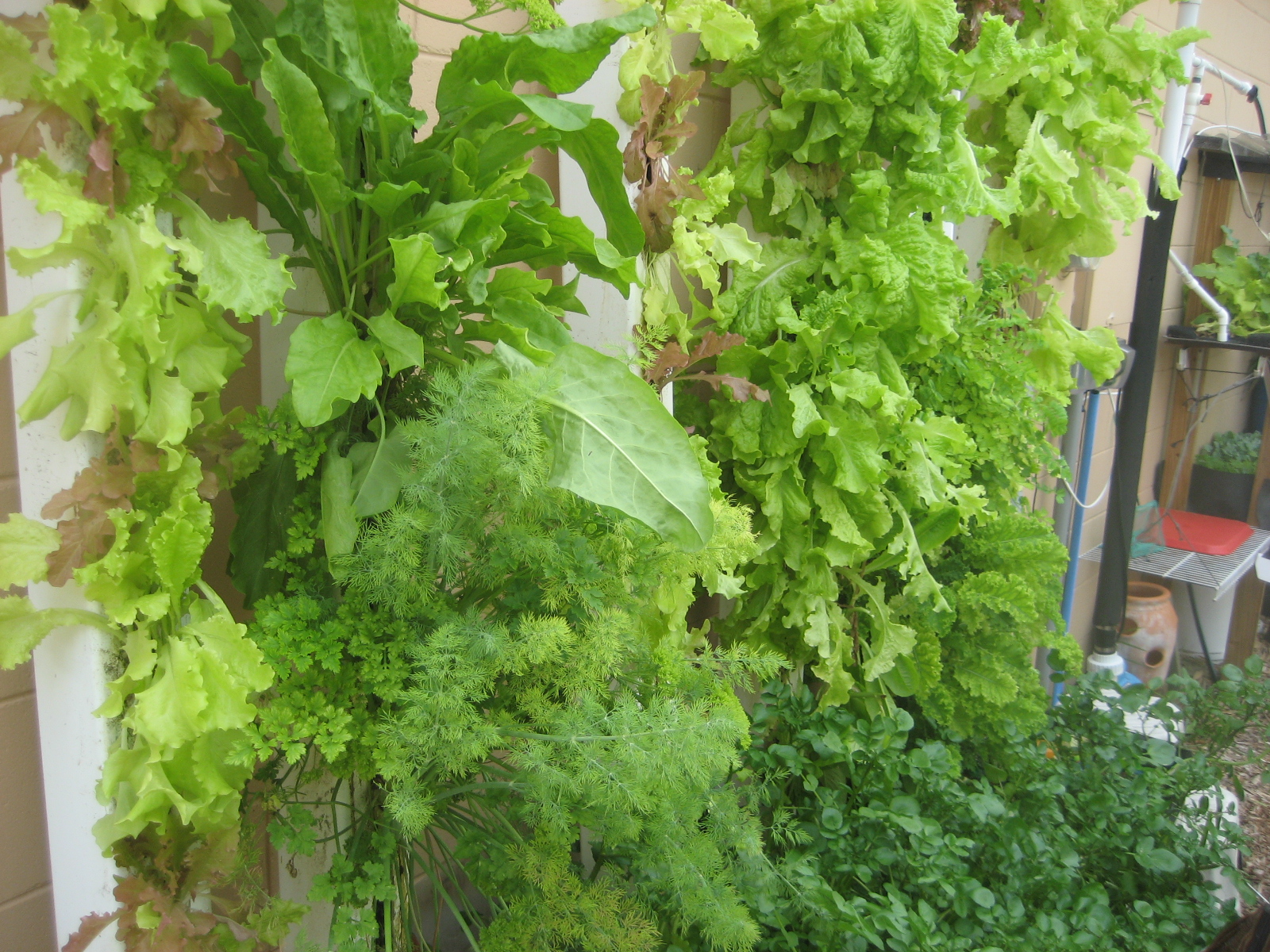 growing plants without soil ccres aquaponic ccres. Black Bedroom Furniture Sets. Home Design Ideas